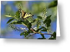 Monarch Tranquility Greeting Card