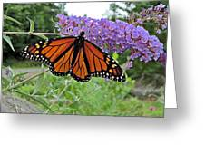 Monarch Under Flowers Greeting Card