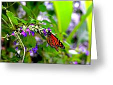 Monarch With Sweet Nectar Greeting Card