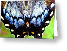 Monarchs Blue Glow Greeting Card by Kim Galluzzo Wozniak