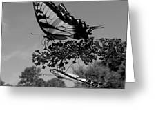 Swallotail In Black And White Greeting Card