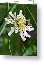 Monet's Garden Bee. Giverny Greeting Card