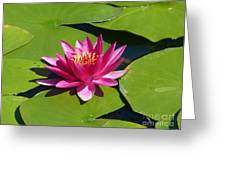 Monet's Waterlily Greeting Card