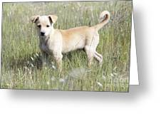 Mongrel Dog Puppy Greeting Card