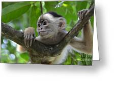Monkey Business Greeting Card by Bob Christopher