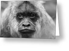 Monkey Eyes Greeting Card