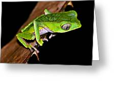 Monkey Frog Greeting Card by Liudmila Di