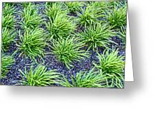 Monkey Grass Abstract Greeting Card