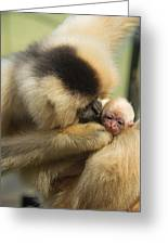 Monkey Mother Greeting Card