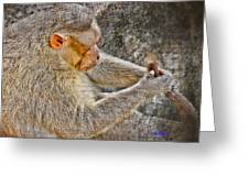 Monkey Playing With Tail Greeting Card