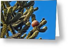 Monkey Puzzle Tree B Greeting Card