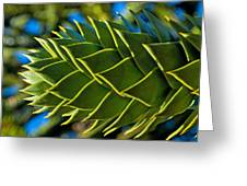Monkey Puzzle Tree D Greeting Card