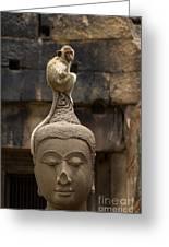 Monkey Sitting Perched On Buddha Head Greeting Card