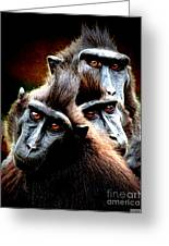 Monkey What Are You Looking At Greeting Card