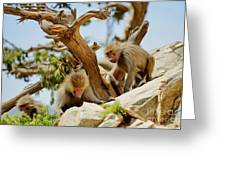 Monkeys On Mountain Greeting Card