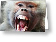 Monkey's Smile Greeting Card