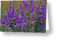 Monkshood In Rocky Harbour-nl Greeting Card