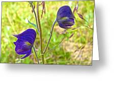 Monkshood On Alpine Tundra Trail At  Eielson Visitor's Center In Denali Np-ak  Greeting Card