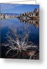 Mono Lake Salt Bush Greeting Card