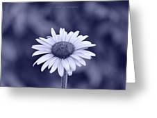 Monochrome Aster Greeting Card