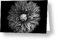 Monochrome Clematis Blossom Greeting Card