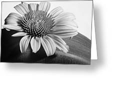 Monochrome Coneflower Greeting Card