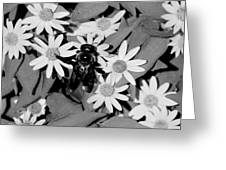 Monochrome Flowers 2 Greeting Card