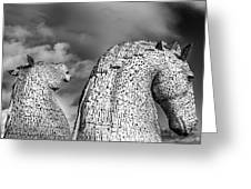 Monochrome Kelpies Greeting Card