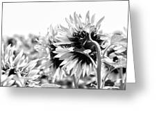 Monochrome Summer Greeting Card