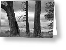 Monochrome Trees Greeting Card