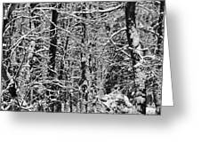 Monochrome Winter Wilderness Greeting Card