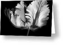 Monocrhome Parrot Tulip Greeting Card
