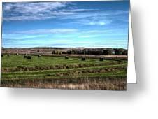 Montana Hayfield Greeting Card