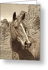 Montana Horse Portrait In Sepia Greeting Card