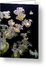 Monterey Aquarium Jellyfish Greeting Card
