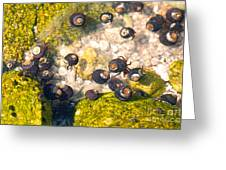 Monterey Bay Tide Pools Greeting Card