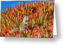Monterey Squirrel Greeting Card