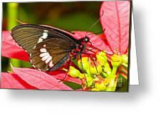 Montezuma Cattleheart Butterfly Greeting Card