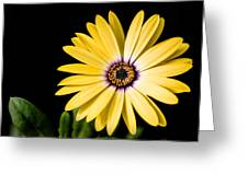 Montgomery County Flower Greeting Card