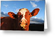 Moo Don't Say Cow Greeting Card