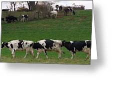 Moo Train Greeting Card
