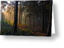 Moody Forest Happy Sun Greeting Card