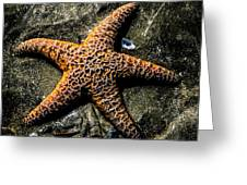 Moody Starfish II Greeting Card
