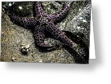 Moody Starfish Iv Greeting Card