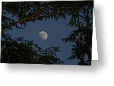 Moon Among The Branches Greeting Card