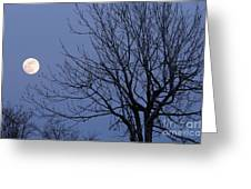 Moon And Bare Tree Greeting Card