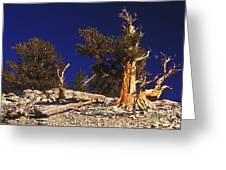 Moon And Bristlecone Pines Greeting Card