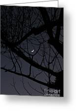Moon Beyond Tree IIi Greeting Card