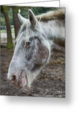 Moon Eyed Horse Greeting Card