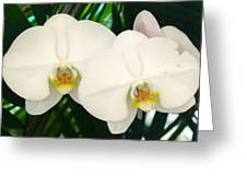 Moon Orchid Pair Greeting Card